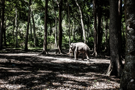centenarian: Old forest in India ( HDR image ) Stock Photo