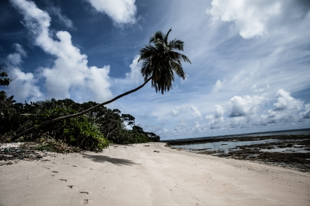 Tropical island of Havelock in Andaman, India. ( HDR image ) photo
