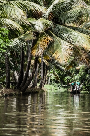 Palm tree tropical forest in backwater of Kochin, Kerala, India ( HDR image) photo
