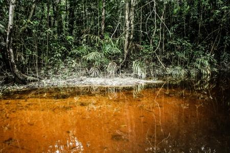 rio amazonas: Un r�o y hermosos �rboles en un bosque tropical (HDR)
