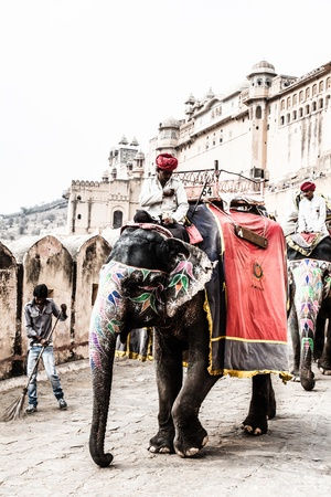 jaipur: India, Rajasthan, Jaipur, the Amber Fort, elephant driver ( HDR image )