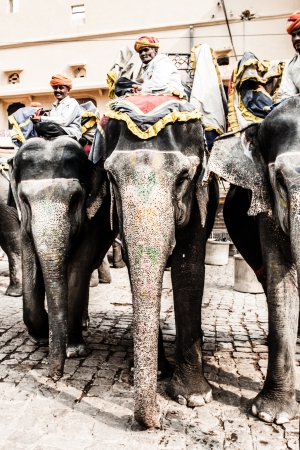 India, Rajasthan, Jaipur, the Amber Fort, elephant driver ( HDR image ) Stock Photo - 17175478