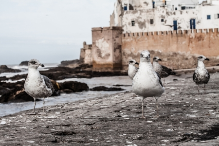 Seagull in Essaouira, Morocco ( HDR image ) Stock Photo