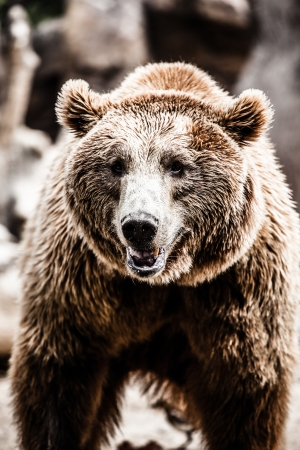 Brown bear in a funny pose ( HDR image ) Stock Photo - 17292847