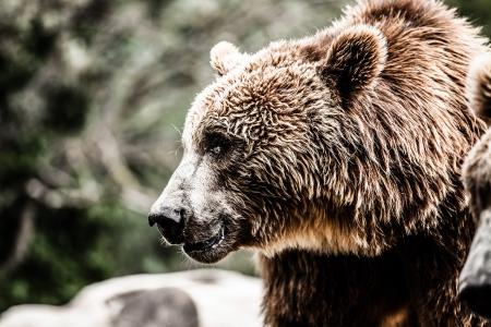 Brown bear in a funny pose ( HDR image ) Stock Photo - 17292937