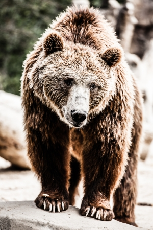 Brown bear in a funny pose ( HDR image ) Stock Photo - 17292864