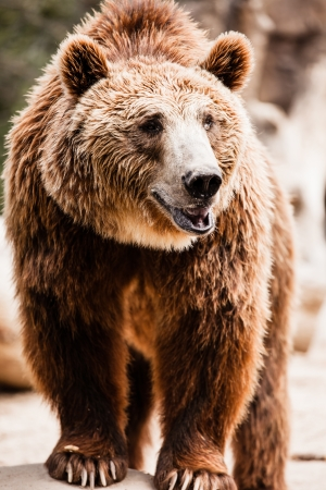 Brown bear in a funny pose ( HDR image ) Stock Photo - 17292830