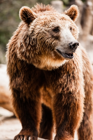 Brown bear in a funny pose ( HDR image ) Stock Photo - 17292799