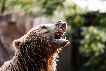 Brown bear in a funny pose ( HDR image ) Stock Photo - 17292824