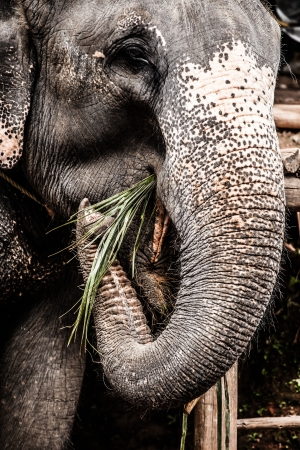 Elephant close up   Stock Photo - 17479138