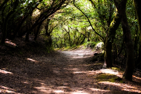 Rainforest in Garajonay National Park, La Gomera, Canary islands  Stock Photo - 17608143