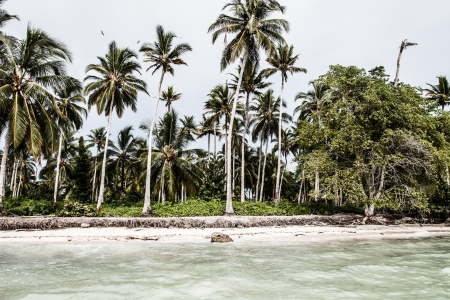 Green Palm Forest in Colombian Island ( HDR image ) Stock Photo - 17717445