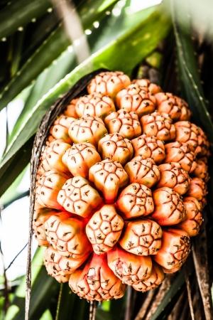Tropische vruchten in strand in India