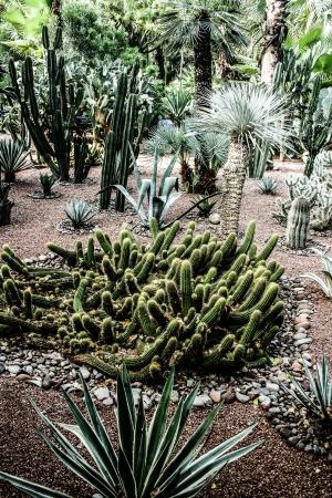 Garden Majorelle in Marrakesh, Morocco, Africa Stock Photo - 17837120