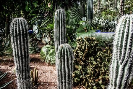 Garden Majorelle in Marrakesh, Morocco, Africa Stock Photo - 17837236