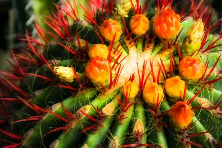 aridness: Garden Majorelle in Marrakesh, Morocco, Africa