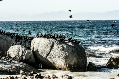 cape of good hope: Crashing waves on rocks with Cormorants and Gulls at Cape of Good Hope, South Africa