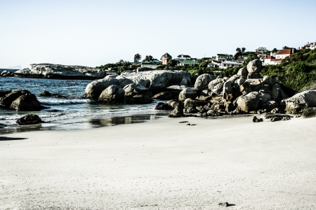 Boulders Beach, Cape Town South Africa  photo