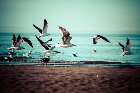 larus: Sea bird seagull. nature closeup