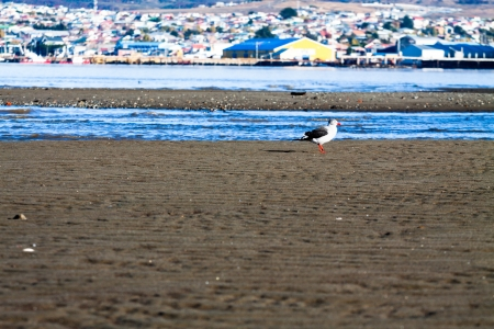 arenas: Beautiful view of Punta Arenas with the Strait of Magellan
