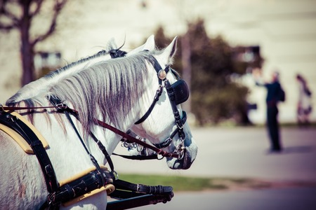 hackney carriage: Traditional horse-drawn Fiaker carriage at famous Hofburg Palace in Vienna, Austria  Stock Photo