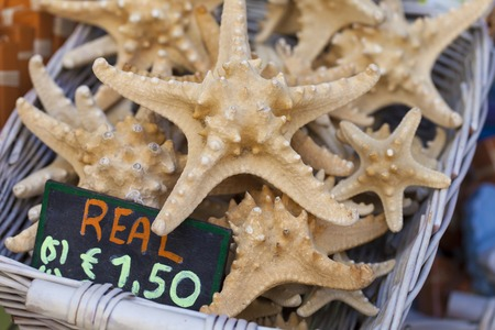 cushion sea star: Starfish and seashells souvenirs for sale