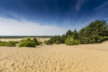 Bledow Desert, an area of sands between Bledow and the village of Chechlo and Klucze in Poland.  photo
