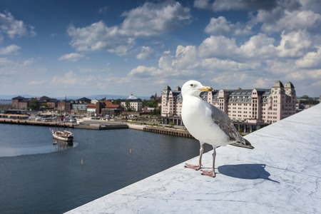 Seagull on opera house in Oslo, Norway photo