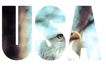 Word USA with bald eagle. photo
