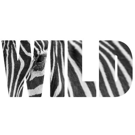 Word WILD zebre portrait