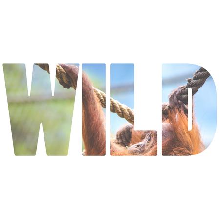 Word WILD over orangutan baby photo