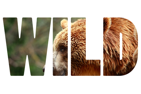 grouchy: Word WILD over brown bear