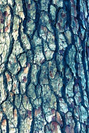 bark background texture: Bark background texture pattern. Stock Photo