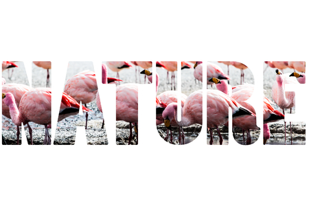 lipez: Word NATURE over pink flamingo.