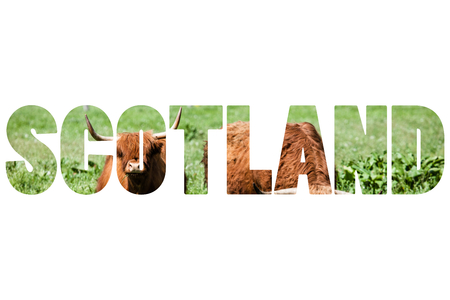 typically scottish: Word SCOTLAND over Scottish highland cow over green grass