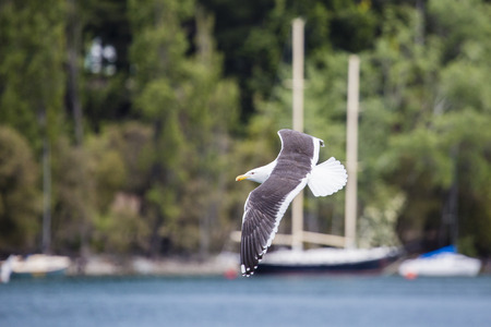 wingspread: Seagulls in the nature