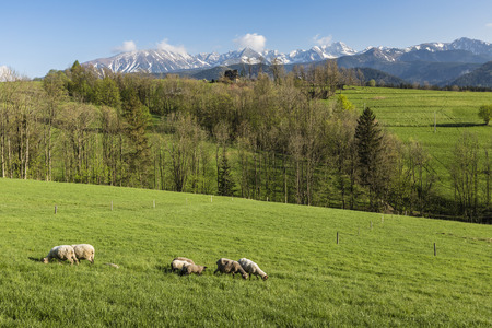 zakopane: Panorama of Tatra Mountains in spring time, Poland