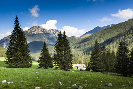 sheep road sign: Chocholowska valley, Tatra Mountains, Poland Stock Photo