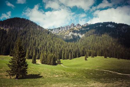 sheep road sign: Wooden hut in Chocholowska valley, Tatra Mountains, Poland
