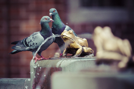 polska monument: Two pigeons and Fountain with golden lucky frog - the symbol of Torun city