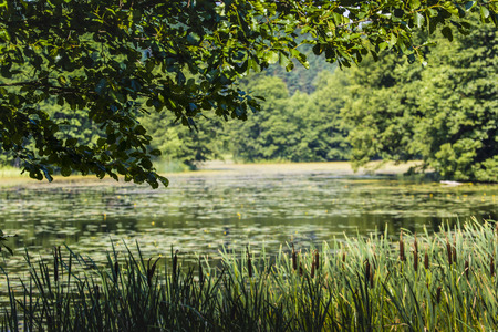 lagging: Black River Hancza in Turtul. Poland Stock Photo