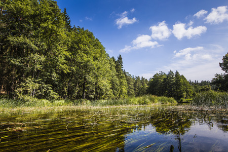warmia: Kayaking on the Black Hancza river, Poland