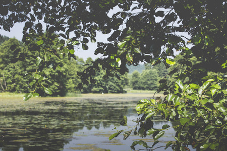 lagging: River Black Hancza in Turtul. Poland