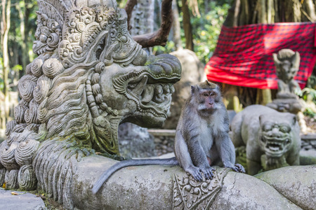 ubud: Long-tailed macaques (Macaca fascicularis) in Sacred Monkey Forest, Ubud, Indonesia