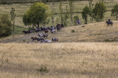 ovine: Stockriders with flock in Alay mountains on pastureland - life in Kyrgyzstan