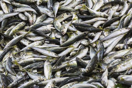 commercial fisheries: Fresh fish at the seafood market Stock Photo