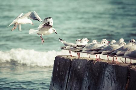 baptize: Group of seagulls Stock Photo