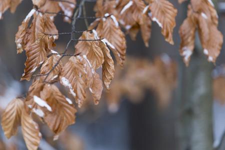 december: hojas congeladas de diciembre