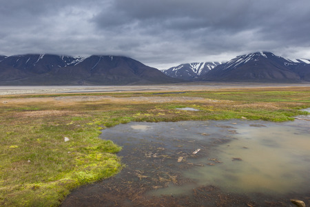 tundra: Arctic tundra in summer, Svalbard, Norway Stock Photo