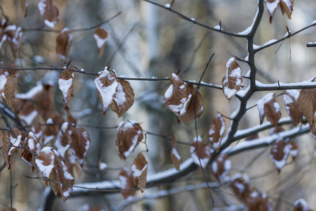 december: December frozen leaves